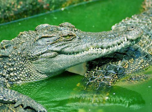 crocodile-farm-siem-reap-slide-2.jpg