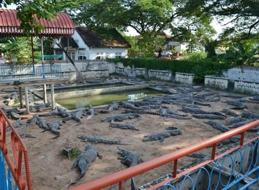 crocodile-farm-siem-reap-slide-4.jpg