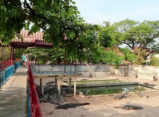 crocodile-farm-siem-reap-slide-5.jpg
